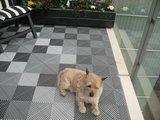 Grijze balkonvloer diervriendelijk